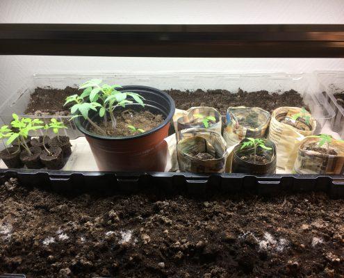 Plantelys